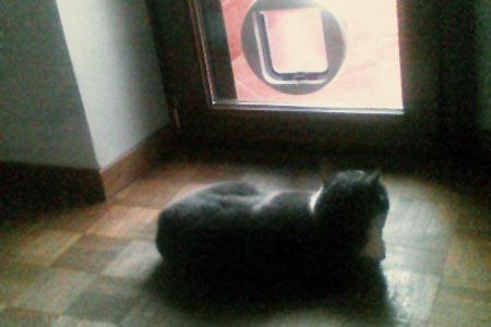 piove piove, la gatta non si muove [ coinquilina felina alla finestra ]