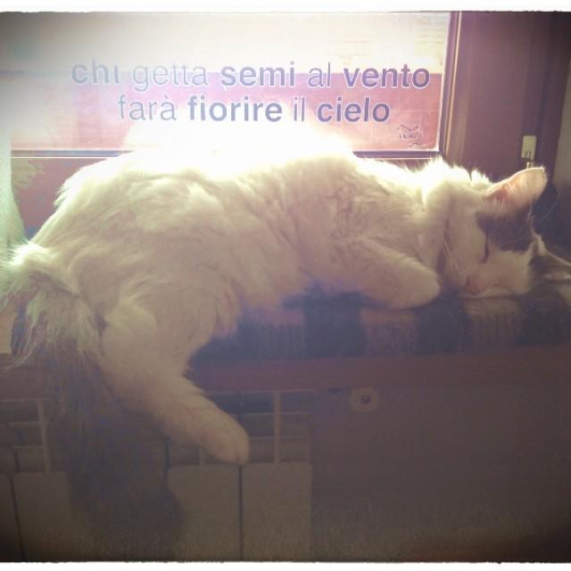 Vita da gatto