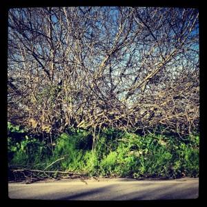 Appia Pignatelli