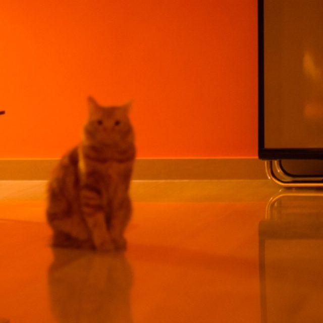 Le mie foto di gatti su Instagram